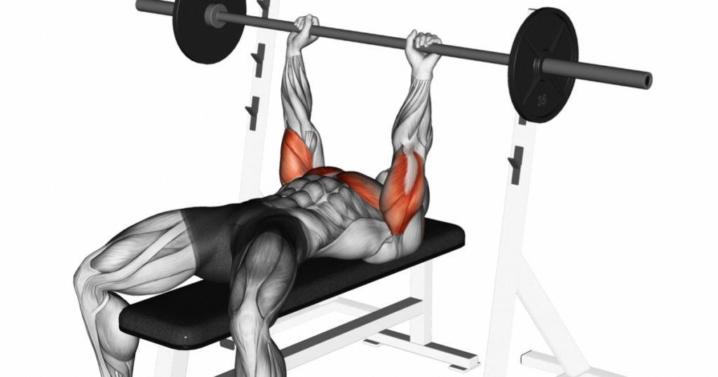 Анатомия мышц, участвующих при жиме узким хватом.
