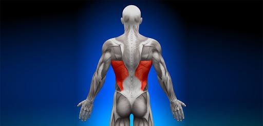 Анатомия мышц спины.