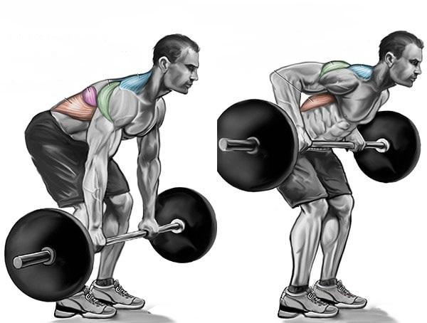 Какие мышцы работают при жиме штанги к поясу в наклоне.