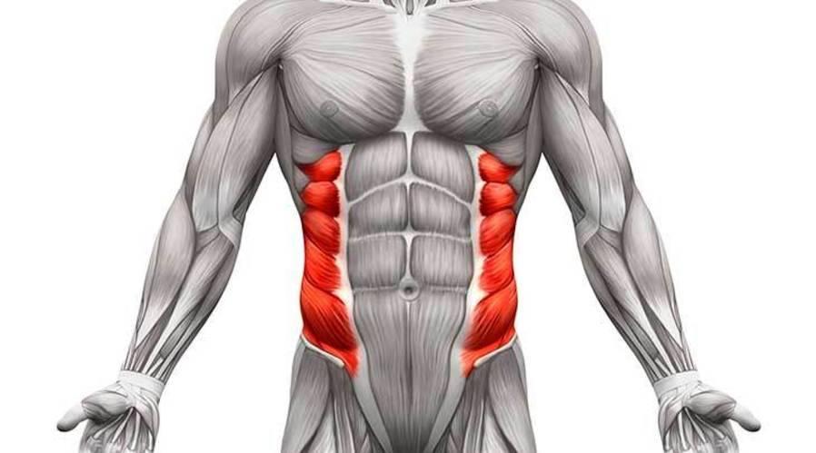 Анатомия мышц пресса.